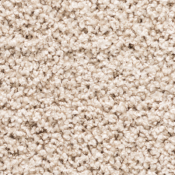 Carpet | Biscuit