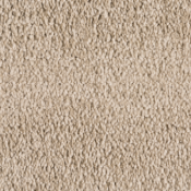 Carpet | Canvas