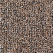 Carpet | Clove